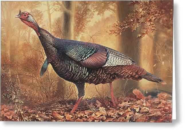 Wild Bird Greeting Cards - Wild Turkey Greeting Card by Hans Droog
