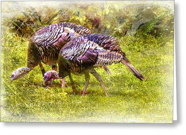 Wild Turkey Hens Greeting Card by Barry Jones