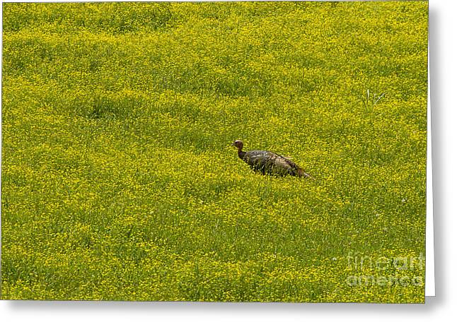 Meleagris Gallopavo Greeting Cards - Wild Turkey in Wild Flowers-Signed-#3442 Greeting Card by J L Woody Wooden
