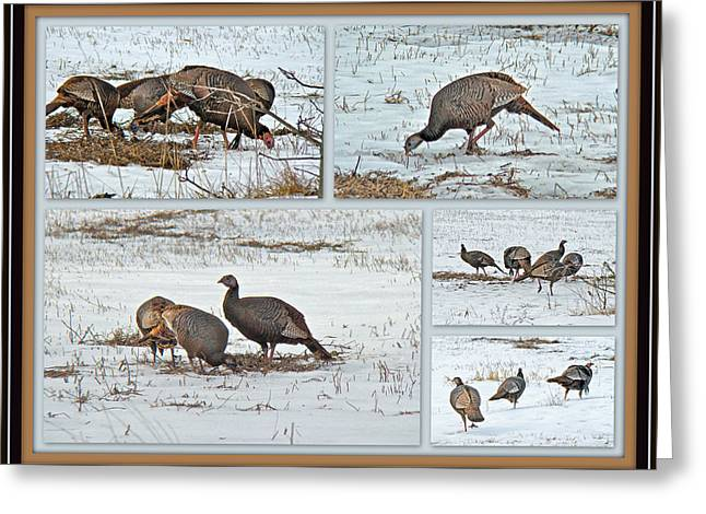 Meleagris Gallopavo Greeting Cards - Wild Turkeys - Meleagris gallopavo Greeting Card by Mother Nature