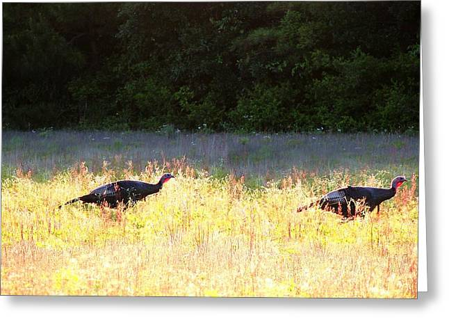 Mary Pyrography Greeting Cards - Wild Turkeys Running Greeting Card by Mary Shannon Marshall