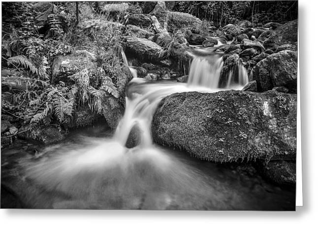 White River Greeting Cards - Wild water Greeting Card by Guido Montanes Castillo