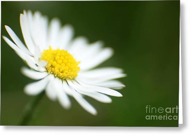 Tiny Whites Greeting Cards - Wild White Flower Greeting Card by Eden Baed