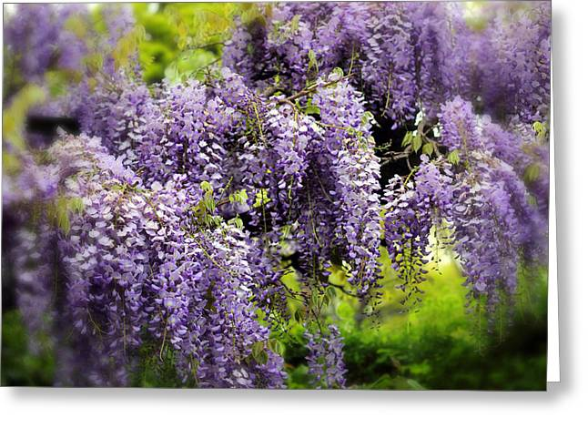 Spring Flowers Digital Art Greeting Cards - Wild Wisteria Greeting Card by Jessica Jenney