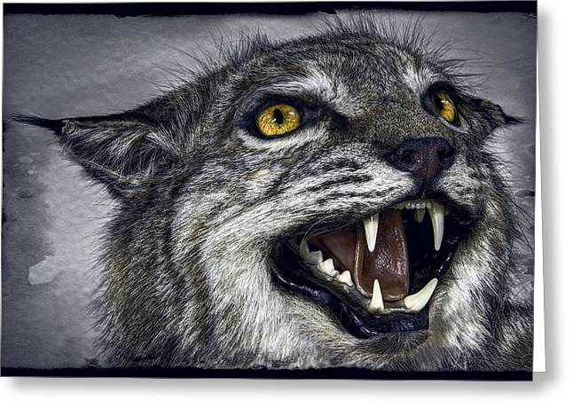Best Sellers -  - Bobcats Photographs Greeting Cards - Wildcat Ferocity Greeting Card by Daniel Hagerman