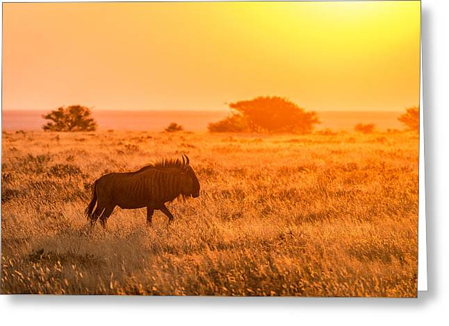 Backlit Greeting Cards - Wildebeest Sunset - Namibia Africa Photograph by Duane Miller Greeting Card by Duane Miller