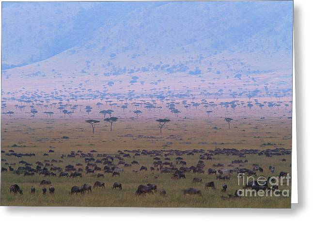 Mountain Valley Greeting Cards - Wildebeests Grazing Greeting Card by Art Wolfe