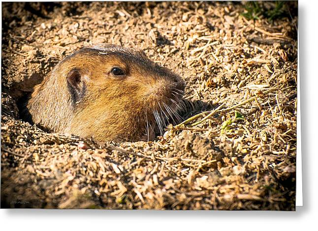 Groundhog Digital Greeting Cards - Wilderness Lakes Thousand Trails Gopher California Greeting Card by  Bob and Nadine Johnston