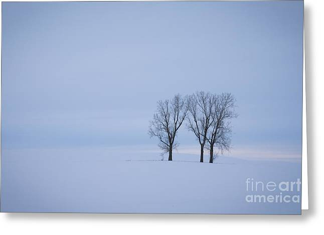 North Idaho Greeting Cards - Wilderness of White Greeting Card by Idaho Scenic Images Linda Lantzy