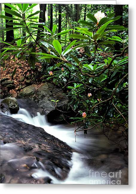 Rhododendron Maximum Greeting Cards - Wilderness Spring Greeting Card by Thomas R Fletcher