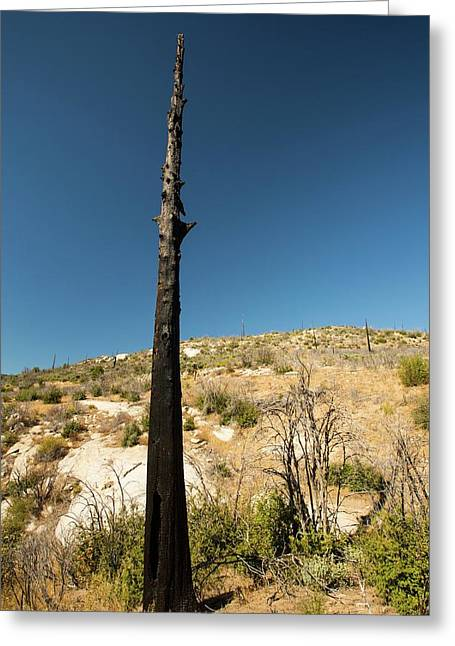 Wildfire Damage In Yosemite Greeting Card by Ashley Cooper