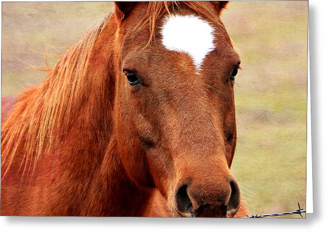 Mo Ranch Greeting Cards - Wildfire - Equine Portrait Greeting Card by Deena Stoddard
