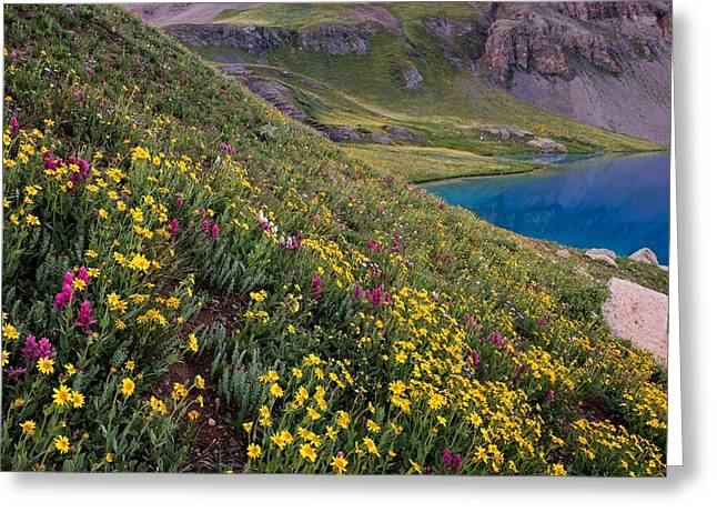 Copyright 2013 By Mike Berenson Greeting Cards - Wildflower Blues From Ice Lake Basin Greeting Card by Mike Berenson