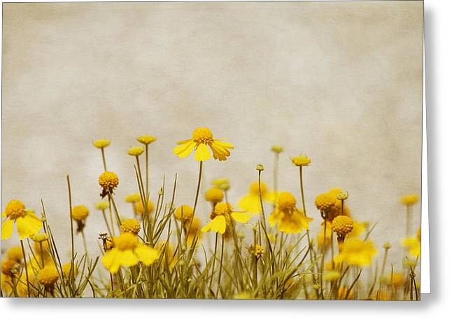 Charming Cottage Greeting Cards - Wildflower Daisies Greeting Card by Kim Hojnacki