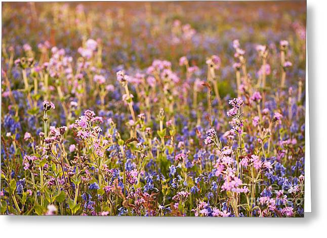 Wildflower Dusk Greeting Card by Anne Gilbert