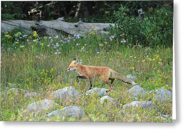Snowie Greeting Cards - Wildflower Fox Greeting Card by Angelique Rea