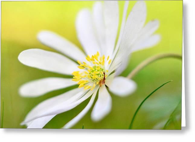 Wildflower Greeting Card by Gynt