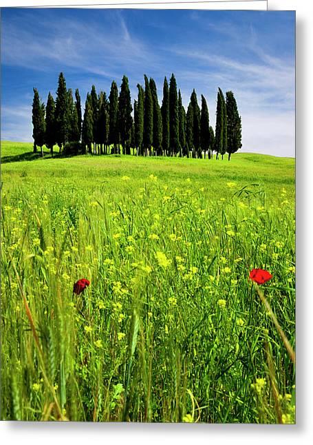 Wildflower In A Field Below A Cluster Greeting Card by Brian Jannsen