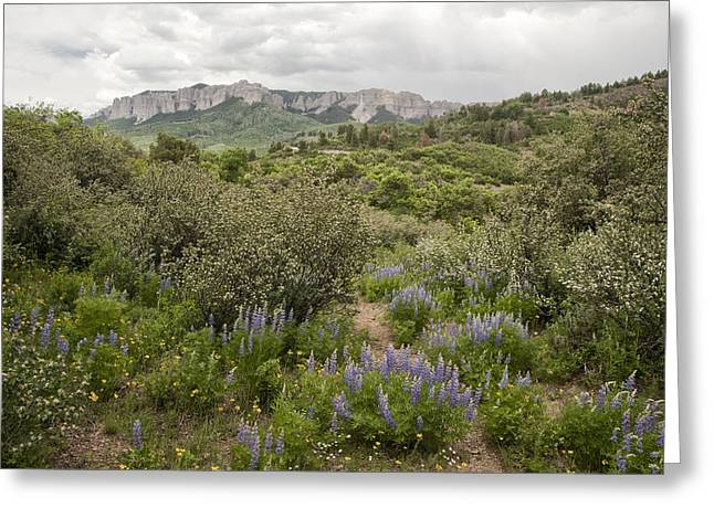 Best Seller Greeting Cards - Wildflower Meadow in Uncompahgre Greeting Card by Melany Sarafis