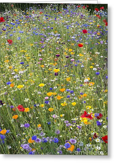 Wildflower Mix Greeting Card by Tim Gainey