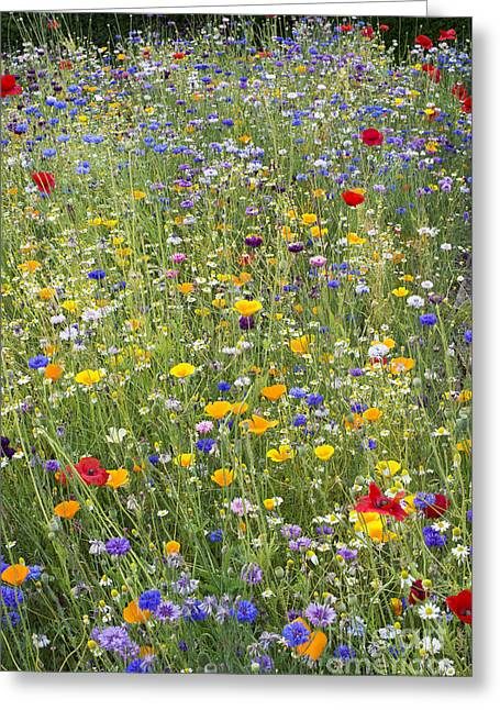Environmentally Greeting Cards - Wildflower Mix Greeting Card by Tim Gainey