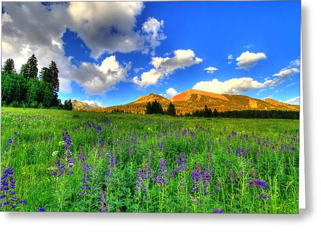 Bike Trip Greeting Cards - Wildflower Trail Greeting Card by Scott Mahon