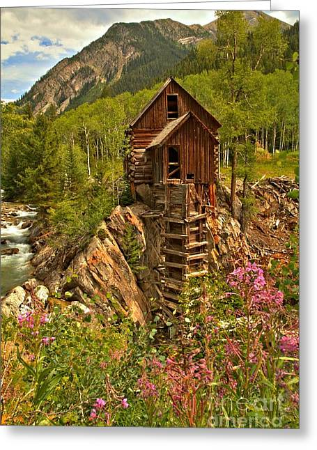 Water Powered Generator Greeting Cards - Wildflower Wonderland Greeting Card by Adam Jewell