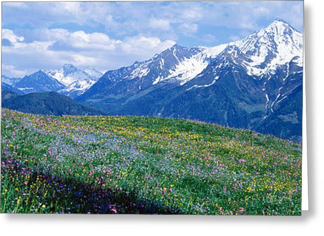 Snow Covered Field Greeting Cards - Wildflowers Along Mountainside Greeting Card by Panoramic Images