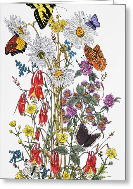 Forgotten Mixed Media Greeting Cards - Wildflowers and Butterflies of the Valley Greeting Card by Stanza Widen