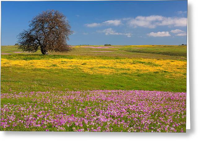 Interior Scene Greeting Cards - Wildflowers and Oak Tree - Spring in Central California Greeting Card by Ram Vasudev
