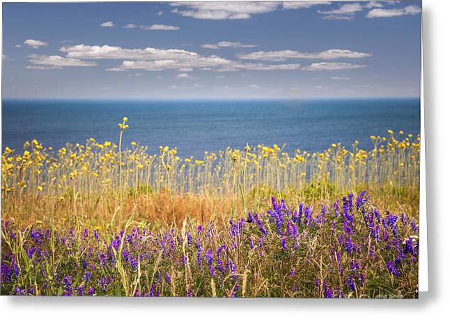 Breezy Greeting Cards - Wildflowers and ocean Greeting Card by Elena Elisseeva