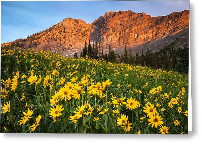 Little Cottonwood Canyon Greeting Cards - Wildflowers and the Evening Sun Greeting Card by Rory Wallwork
