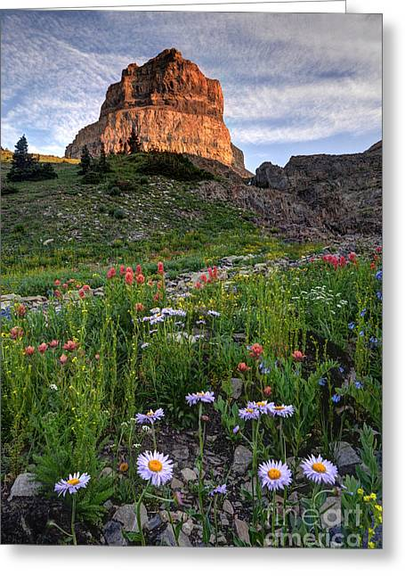 Aster Greeting Cards - Wildflowers and Timpanogos South Peak at Sunset Greeting Card by Gary Whitton