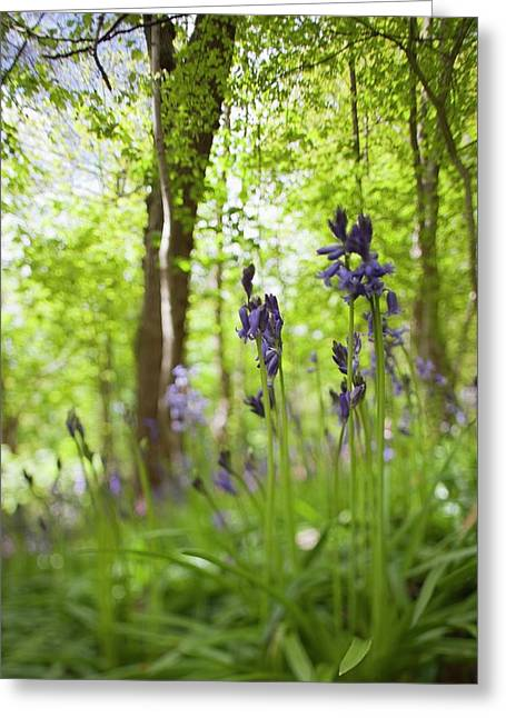 Wildflowers And Trees Illuminated Greeting Card by John Short
