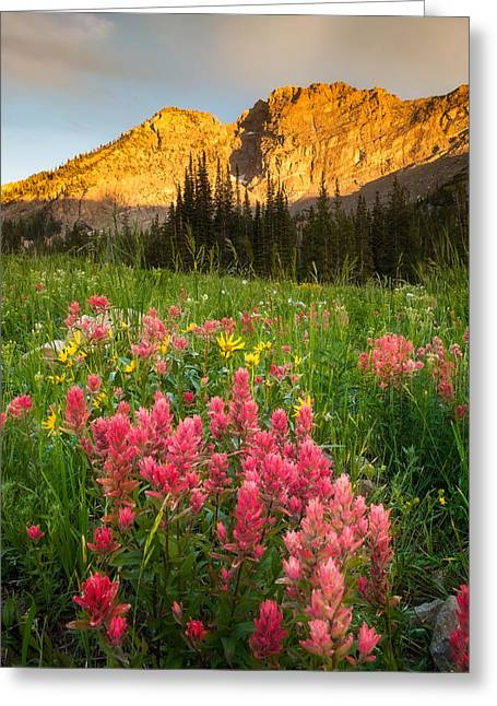 Little Cottonwood Canyon Greeting Cards - Wildflowers At Albion Basin Greeting Card by Rory Wallwork