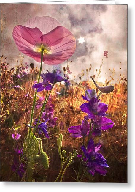 Delphinium Greeting Cards - Wildflowers at Dawn Greeting Card by Debra and Dave Vanderlaan