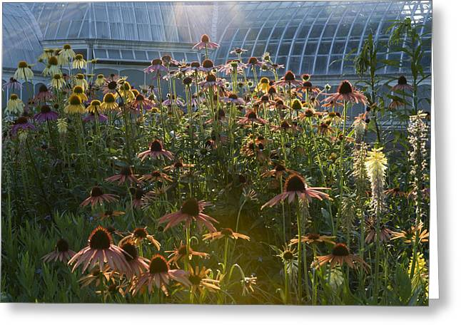 Phipps Conservatory Greeting Cards - Wildflowers at Phipps Greeting Card by Mark Milar