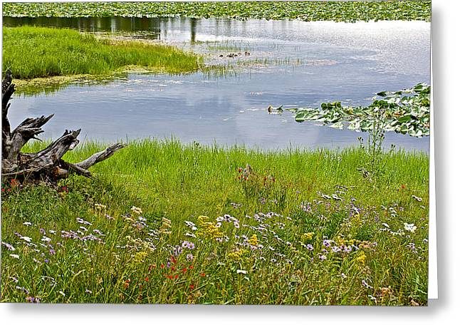 Pond In Park Greeting Cards - Wildflowers by Heron Pond in Grand Teton National Park-Wyoming Greeting Card by Ruth Hager