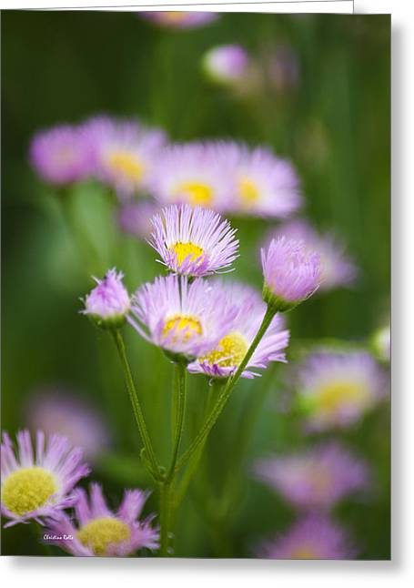 Asters Greeting Cards - Wildflowers - Common Fleabane Greeting Card by Christina Rollo
