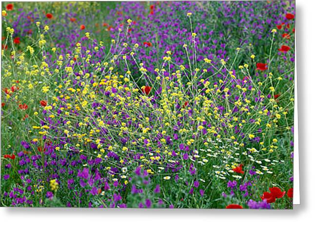 Colorful Photography Greeting Cards - Wildflowers El Escorial Spain Greeting Card by Panoramic Images