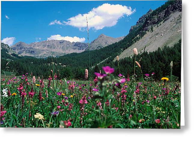 Wildflower Photography Greeting Cards - Wildflowers In A Field At Lakeside Greeting Card by Panoramic Images