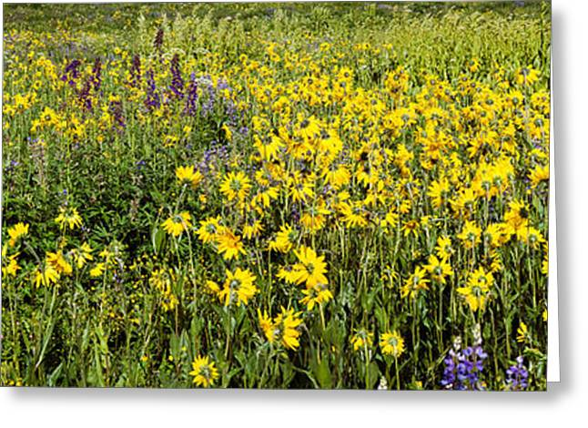 Crested Butte Greeting Cards - Wildflowers In A Field, Crested Butte Greeting Card by Panoramic Images