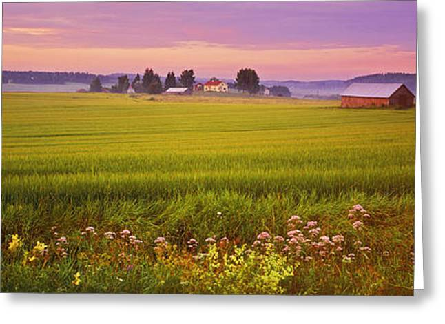 Agricultural Building Greeting Cards - Wildflowers In A Field, Finland Greeting Card by Panoramic Images