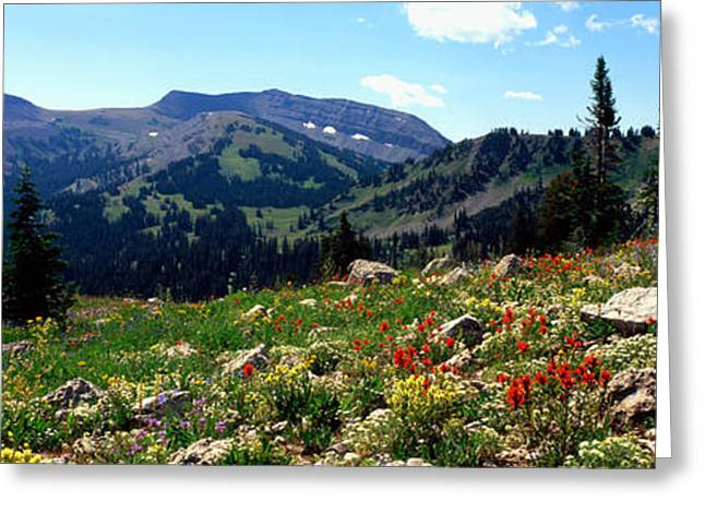 Mountain Greeting Cards - Wildflowers In A Field, Rendezvous Greeting Card by Panoramic Images