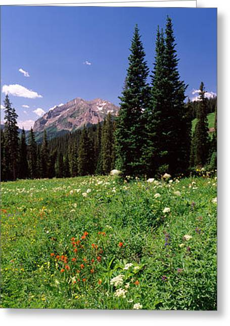 Wildflowers In A Forest, Crested Butte Greeting Card by Panoramic Images