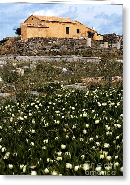 Stone House Greeting Cards - Wildflowers in Delos Greeting Card by John Rizzuto