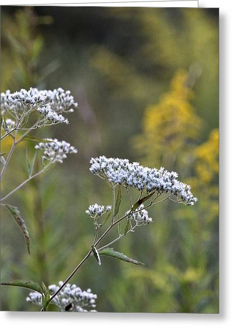 Wildfowers Greeting Cards - Wildflowers in September 2012 Greeting Card by Maria Urso