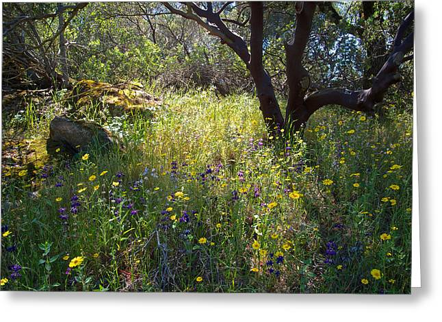 Escapees Photographs Greeting Cards - Wildflowers in Sierra Nevada Foothills in Park Sierra-CA Greeting Card by Ruth Hager