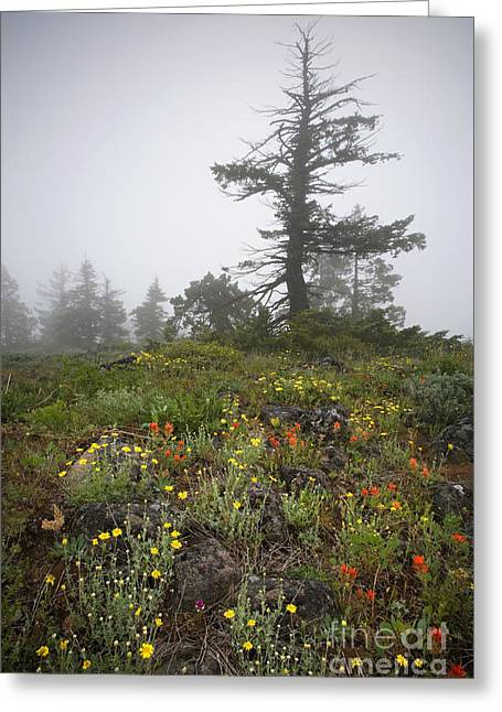 Siskiyou County Greeting Cards - Wildflowers In The Fog, Or Greeting Card by Sean Bagshaw