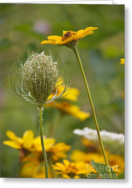 Indiana Flowers Greeting Cards - Wildflowers Greeting Card by Lynne Dohner